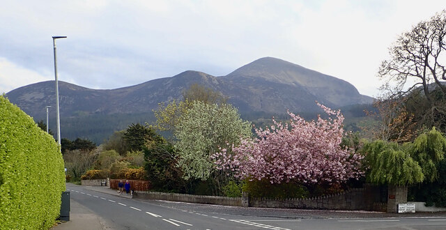 Contrast between the blackened slopes of the Mournes and the lush, colourful, fringes of the town of Newcastle.