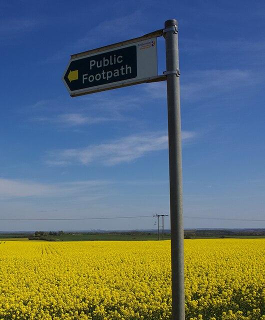 Footpath through the golden field