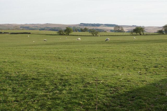 Field near Gamble Hole Farm