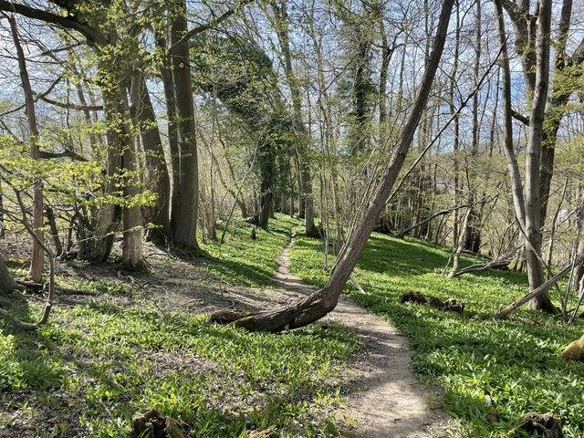 Woodland near Owl House