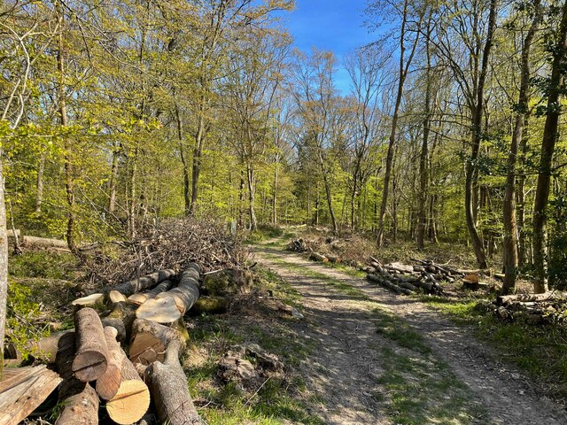 Cooksbroom Wood