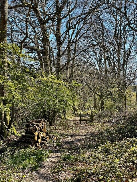 Footpath at edge of Tongs Wood