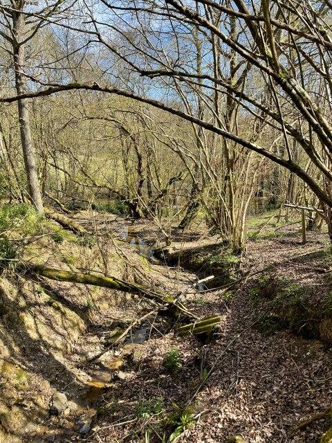 Stream at Brown's Wood