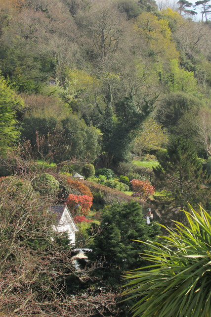 Spring colours, Ilsham valley