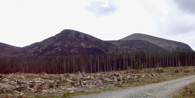 Burnt vegetation cover on Thomas's Mountain