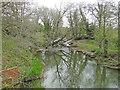 TM2482 : River Waveney downstream from Shotford Bridge by Adrian S Pye