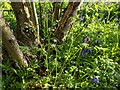 TF0820 : Wild plants by Bob Harvey