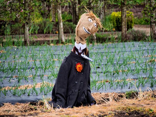 Scarecrow in the Kitchen Garden at Tatton Park