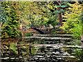SJ7481 : Tatton Park Japanese Garden by David Dixon