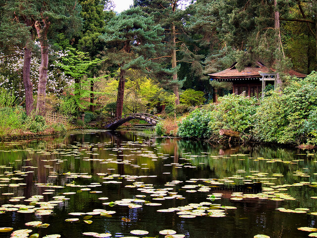 Shinto Shrine and Almond-eye Bridge, Tatton Park Japanese Garden