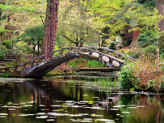 Tatton Park Japanese Garden, The Almond Eye Bridge