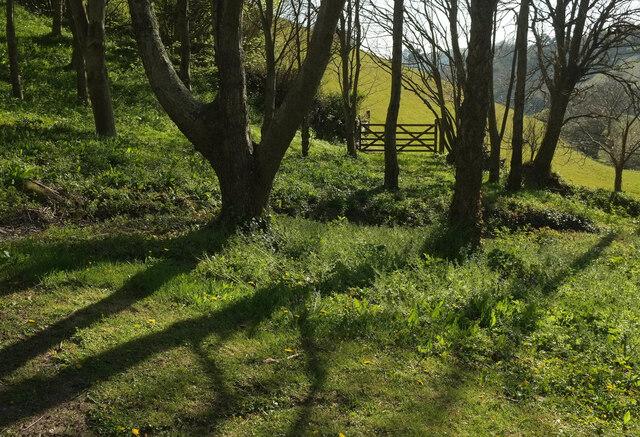 Trees near Home Farm