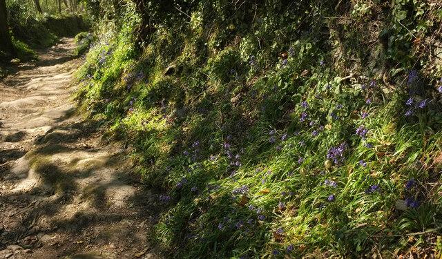 Path to Home Farm