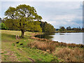 SJ7581 : Tatton Park, Melchett Mere by David Dixon
