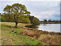SJ7581 : Tatton Park, Melchett Mere by David Dixon
