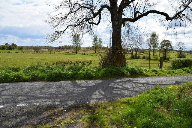 Tree shadows, Deroran