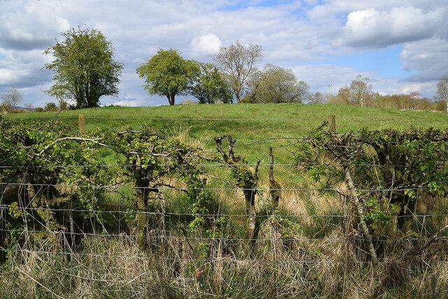 Trees on a hill, Deroran
