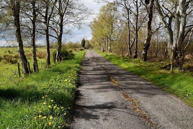 Dandelions along Deroar Road