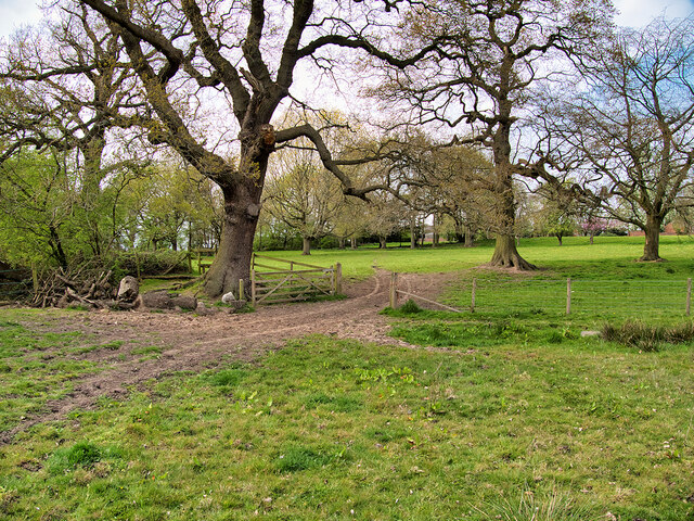 Mobberley Field, Track and Gate towards Dairy Farm