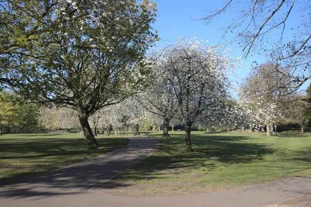 Cherry Blossom on the Wellhead