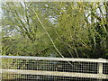 TM1278 : The River Waveney is in there somewhere by Adrian S Pye