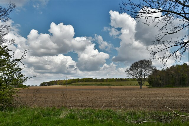 Methwold: Farmland and the edge of a large plantation