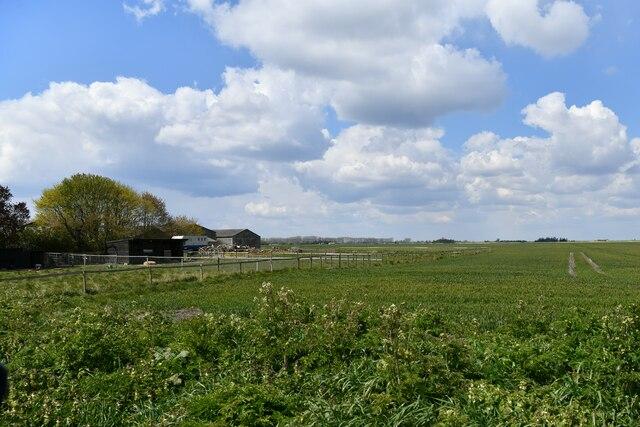 Brandon Bank, Anchor Drove: Stokes Farm