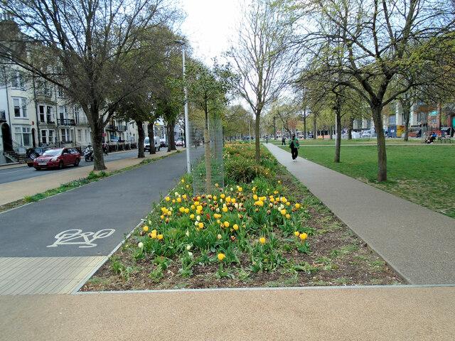 Tulips in Victoria Gardens