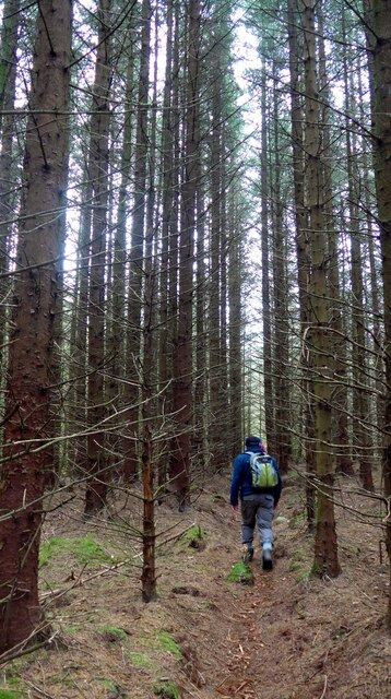 Through the trees in the Carron Valley Forest