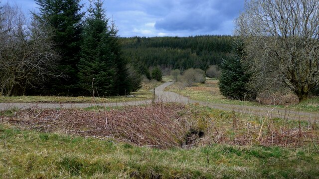 Track junction in the Carron Valley Forest
