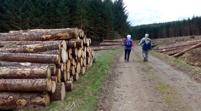New log stacks in the Carron Valley Forest