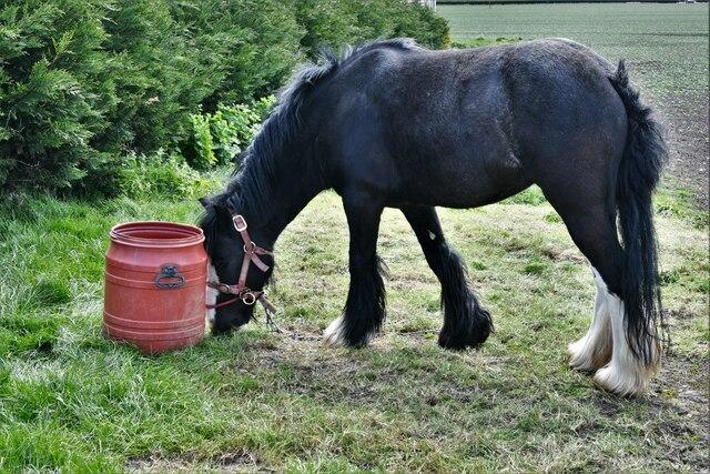 Welney: Pony