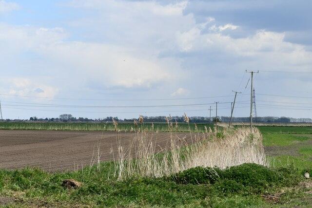 Littleport,  Hale Fen Road: Ploughed field
