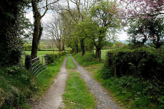 Lane, Reaghan