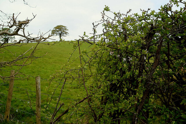 A gap in the hedge, Ballykeel