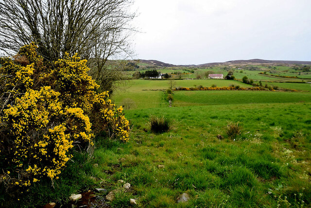 Whins along a field boundary, Ballykeel