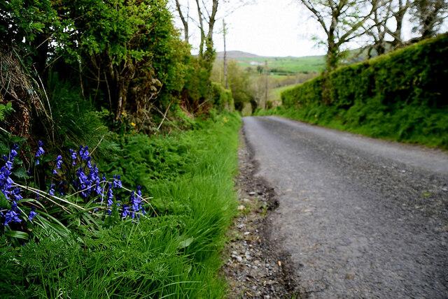 Bluebells along Ballykeel Road by Kenneth  Allen