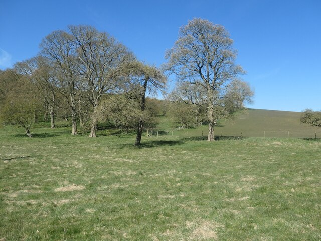 Trees on open access land, North Dale