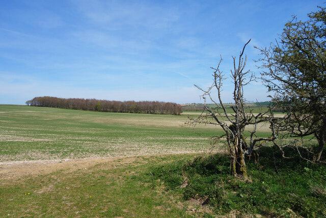 Farmland on Great Litchfield Down