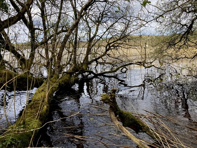 Fallen trees, Toms Island