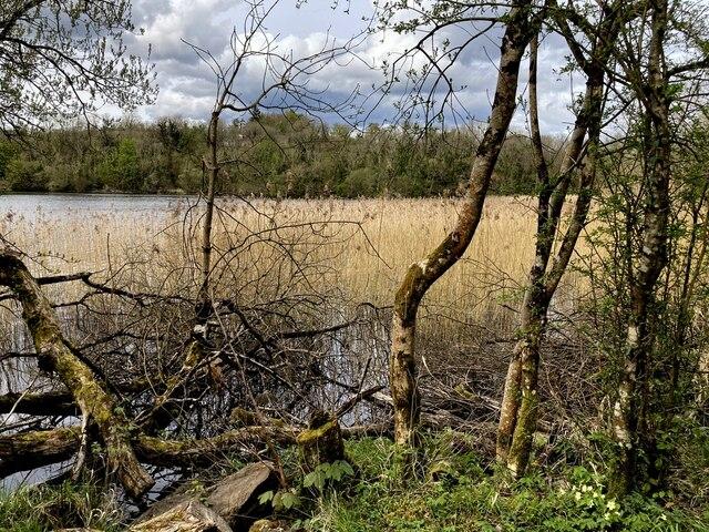 Bushes and reeds, Bunaninver, Lough Erne
