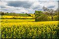 TQ3053 : Below Ockley Hill by Ian Capper
