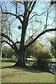 TF0919 : Tree by the river by Bob Harvey