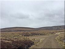 NH7821 : View toward shooting lodge at track junction by thejackrustles