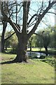 TF0919 : Riverside tree by Bob Harvey