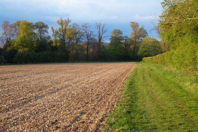Farmland, Pangbourne