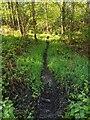 TF0820 : Deer track by Bob Harvey