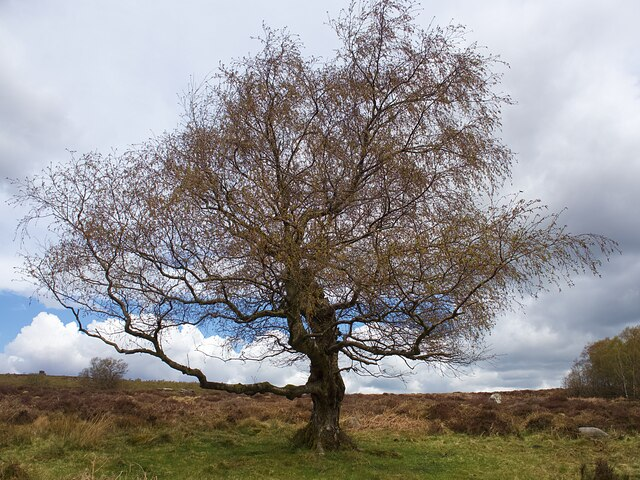 Lonely tree in Lawrence Field