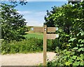 TQ5501 : South Downs Way Signpost by PAUL FARMER