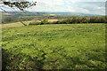 SX6247 : Grass field by Furzedown Wood by Derek Harper